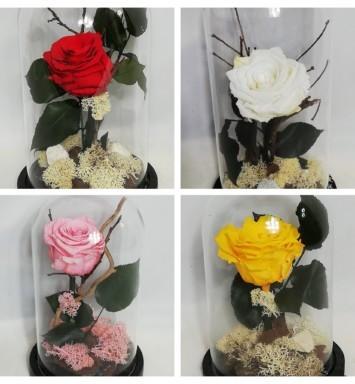 Αιώνια τριαντάφυλλα